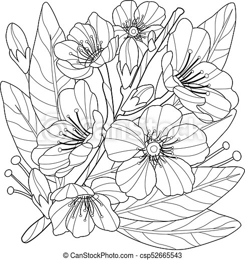 Blossoming Almond Tree Branch With Flowers Coloring Book Page