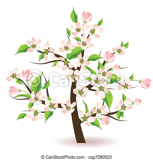 Blossoming apple tree  - csp7280523