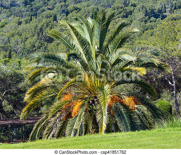 Blossoming palm tree blossoming palm tree with yellow flowers in blossoming palm tree csp41851762 mightylinksfo