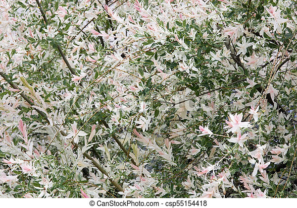 Blossoming spring bush with pink flowers spring nature real blossoming spring bush with pink flowers csp55154418 mightylinksfo