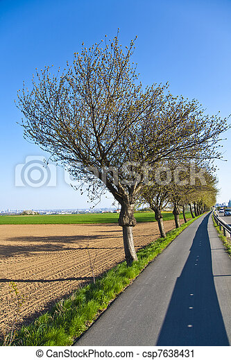 blossoming tree at a street with bicycle lane - csp7638431
