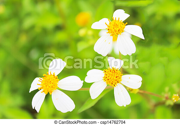 Blossoming tree branch with white flowers - csp14762704