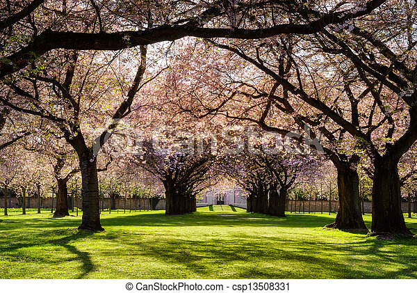 Blossoming trees in warm evening sunlight - csp13508331