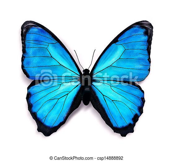 blu, farfalla - csp14888892