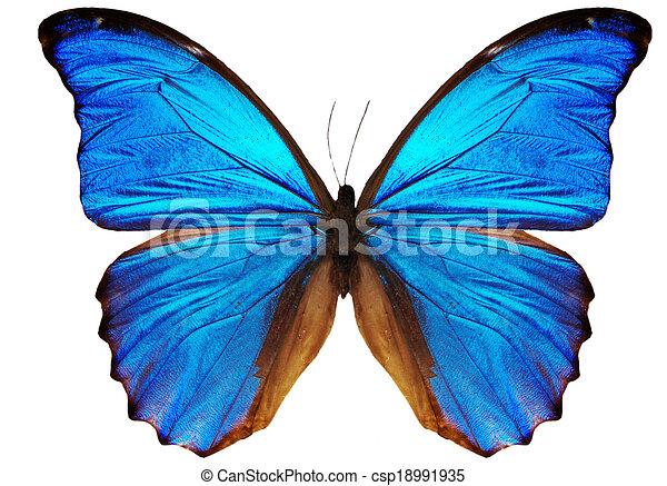 Blu Farfalla Sfondo Bianco