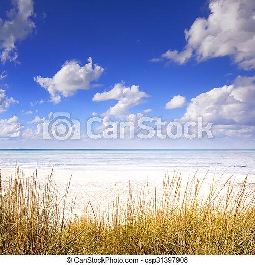blu, spiaggia, dune, cielo, oceano, sabbia, bianco, erba - csp31397908