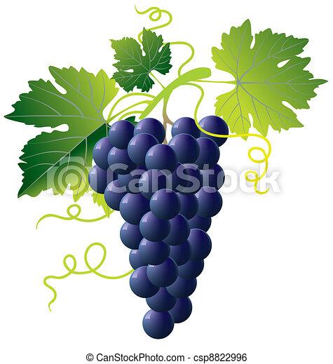 blu, uva, mazzo - csp8822996