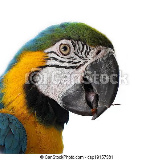 Blue and Gold Macaw (Ara ararauna) on a white background - csp19157381