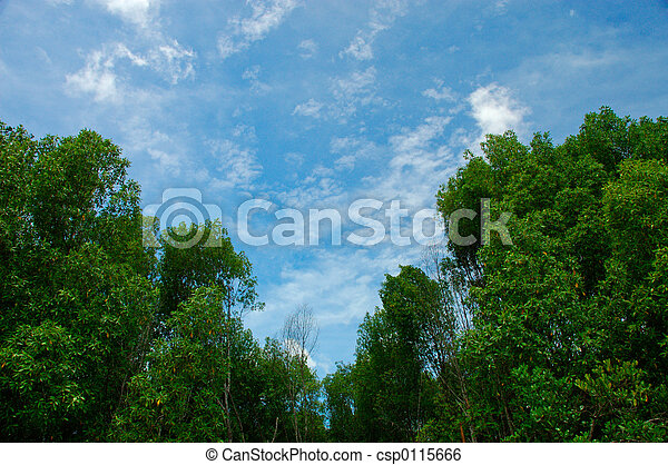 blue and green - csp0115666