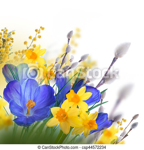 Blue and yellow crocus and snowdrops with willow butterflies on the blue and yellow crocus and snowdrops with willow butterflies on the background of spring flowers mightylinksfo