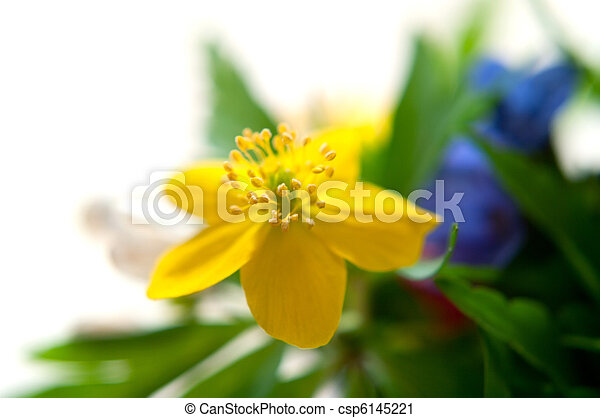 blue and yellow flowers - csp6145221