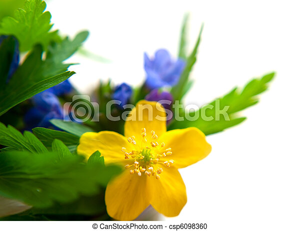 blue and yellow flowers - csp6098360