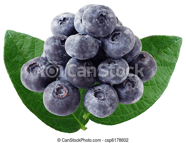 Blue Berry and Leaves - csp6178602