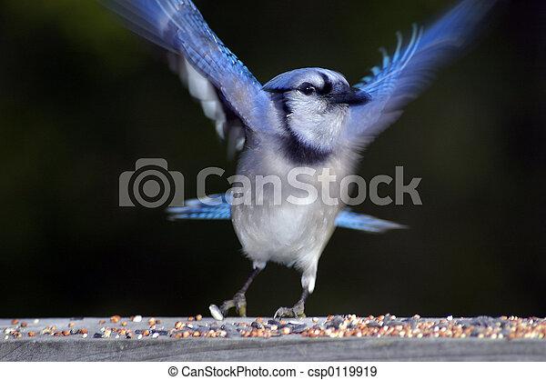 Blue Bird at the feeder - csp0119919