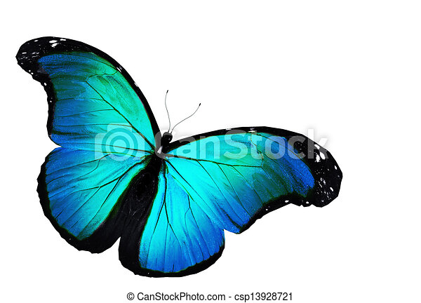 Blue Butterfly Flying Isolated On White