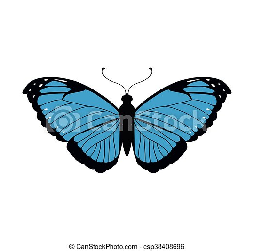 blue Butterfly icon. Insect design. Vector graphic - csp38408696