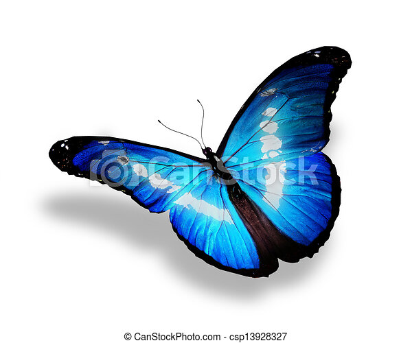 Blue butterfly, isolated on white background - csp13928327