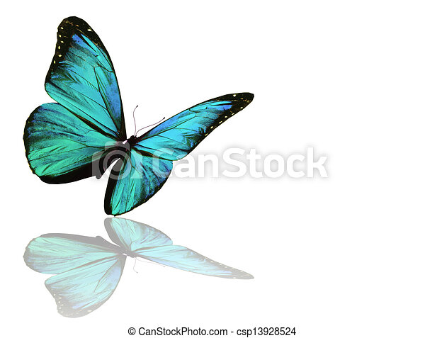 Blue butterfly, isolated on white background - csp13928524
