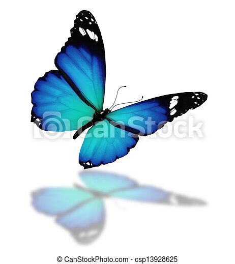 Blue butterfly, isolated on white background - csp13928625