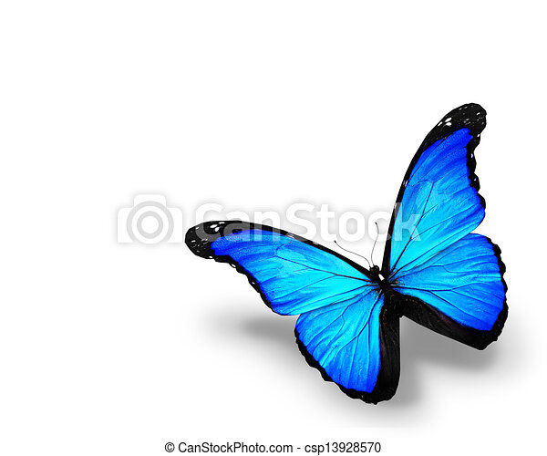 Blue butterfly, isolated on white background - csp13928570