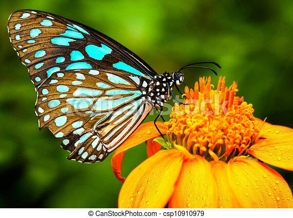 Blue butterfly - csp10910979