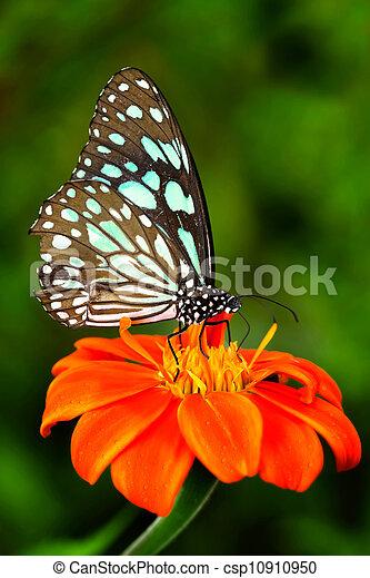 Blue butterfly - csp10910950