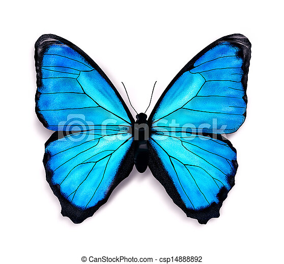 Blue butterfly  - csp14888892
