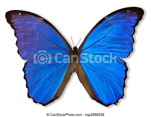 Blue Butterfly (with Path) - csp2986258