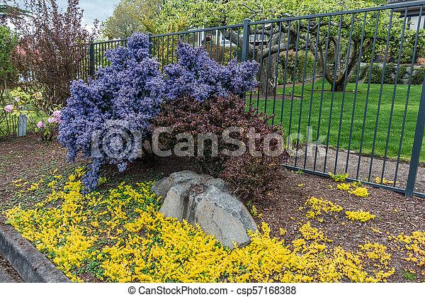 Blue California Lilac 2 - csp57168388