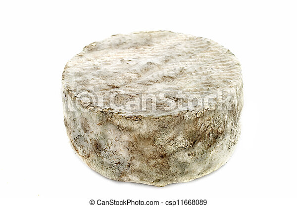 blue cheese - csp11668089