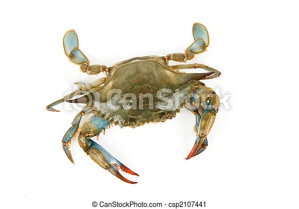 Blue Crab - csp2107441
