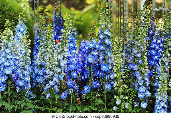 blue delphinium flower - csp33990938