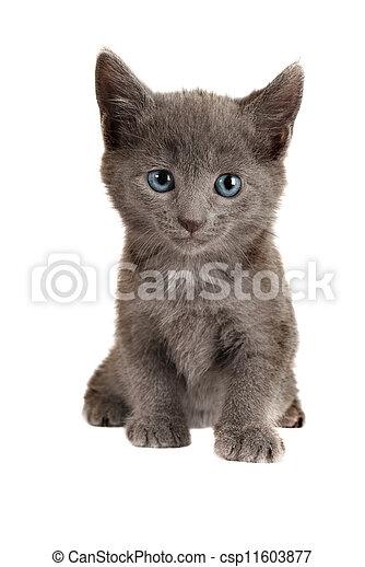 Blue Eyed Grey Kitten On White Gray Kitten With Blue Eyes Sitting On White Background Canstock