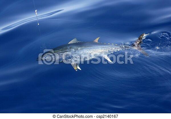 Blue fin tuna Mediterranean fishing and release  - csp2140167