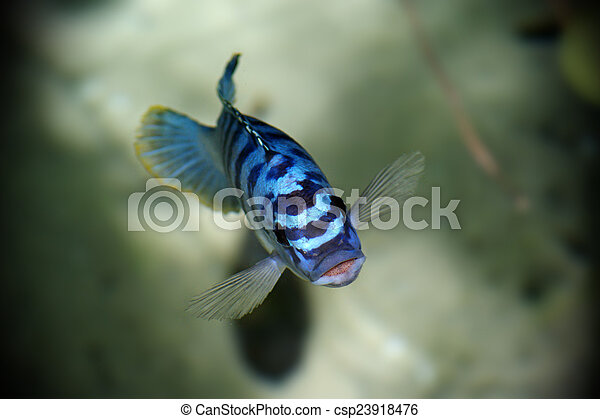 Blue Fish - csp23918476