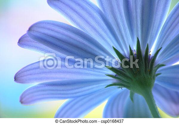 Blue flower - csp0168437