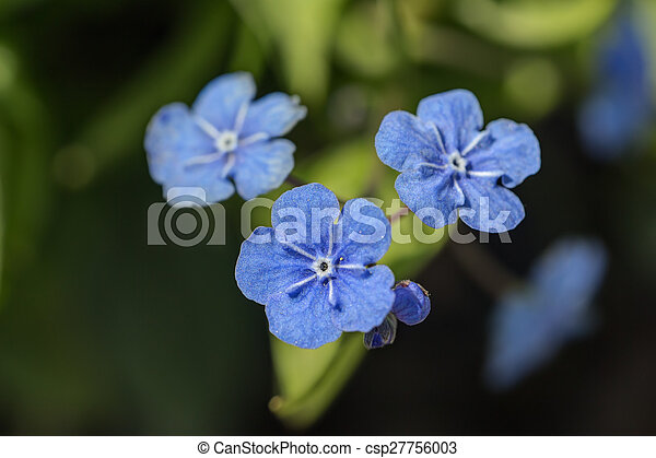 Blue Flowers Close Up Small Blue Spring Flowers Close Up