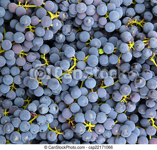 blue grapes background - csp22171066