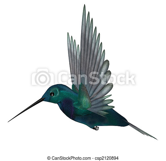 Blue Green Hummingbird - csp2120894