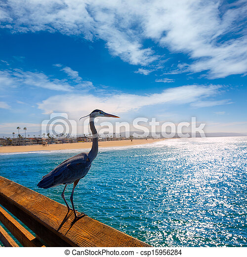 Blue Heron Ardea cinerea in Newport pier California - csp15956284