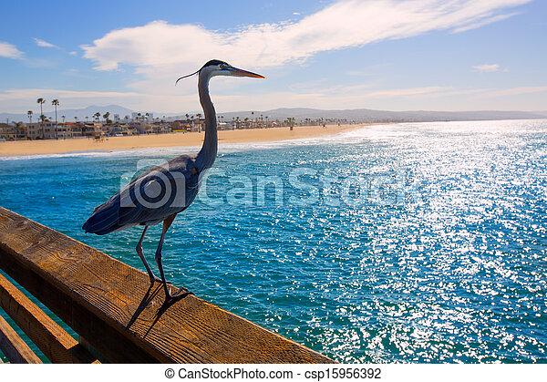 Blue Heron Ardea cinerea in Newport pier California - csp15956392