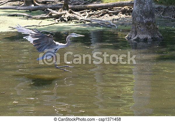 Blue Heron - csp1371458