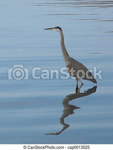 Blue Heron - csp0013525