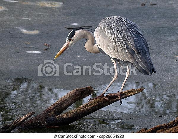 Blue heron - csp26854920