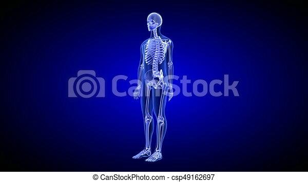 Blue Human Anatomy Body 3d Scan Render Rotating Seamless Loop