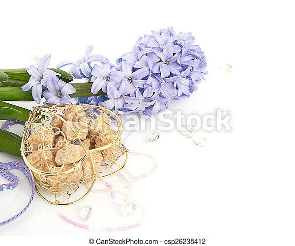 Blue Hyacinth isolated on white background - csp26238412
