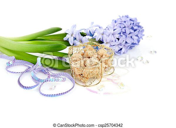 Blue Hyacinth isolated on white background - csp25704342