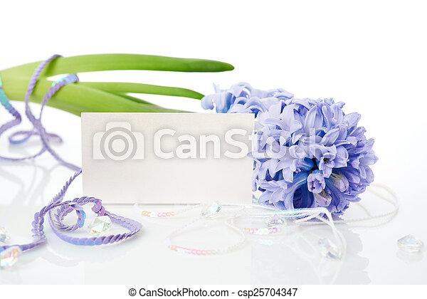 Blue Hyacinth isolated on white background - csp25704347