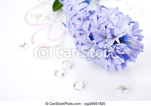 Blue Hyacinth isolated on white background - csp26651920