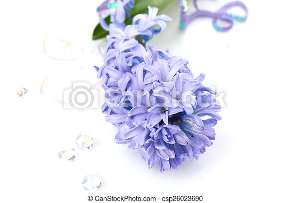 Blue Hyacinth isolated on white background - csp26023690